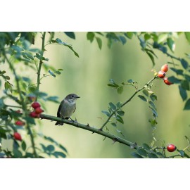 Madárház légykapó madárnak
